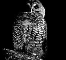 Barred Owl by NaturePunk