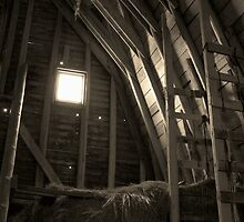 Inside The Barn by Nikki Trexel