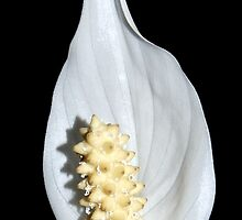 Peace Lilly by Peter Green