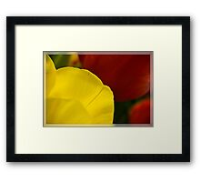 Petals of Perfection Framed Print