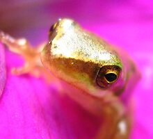 frog in purple petunia by Belinda Cottee