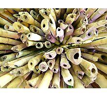 Neon light on Bamboo  Photographic Print