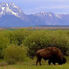 ~ Where The Buffalo Roam ~ by WesternDreamer