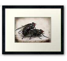 Porn Fly Framed Print