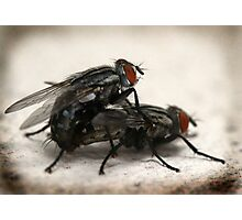 Porn Fly Photographic Print