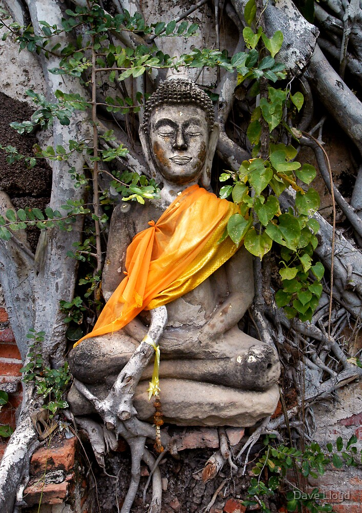 Buddha In Tree Roots by Dave Lloyd