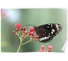 Beautiful Butterfly on Red Flower Poster