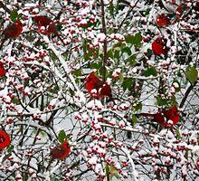 Raining Cardinals by Nisha Kurien