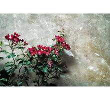 Flowers against wall Photographic Print