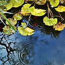Lily pads by Silvia Ganora