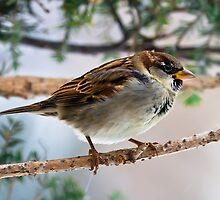Tree Sparrow by Benjamin Young