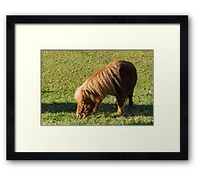 horse pony  in the farm Framed Print