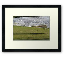 greenhouse in the farm Framed Print
