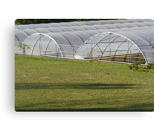 greenhouse in the farm Canvas Print