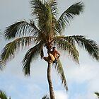 Hawaii Luau by Lainey Simon