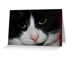 Binky Cat2 Greeting Card