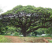 Trees 2 Photographic Print