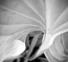 Leaf by Jean-François Dupuis