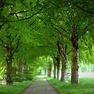 Old Traditional Countryroad with Oak Trees by ienemien