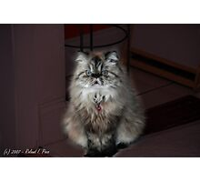 Fur Ball Photographic Print