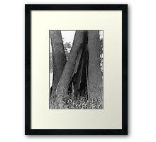 TREE TENT Framed Print