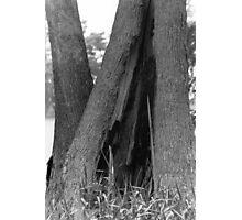 TREE TENT Photographic Print
