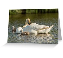 Wild Mute Swan and Baby Cygnets Greeting Card