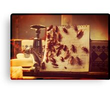 Cockroach Love Hate Living Situation Canvas Print