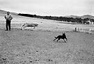 Sheepdog by docophoto