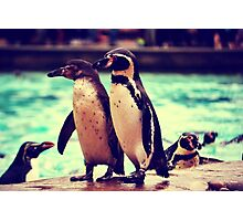 Penguin Parade at London Zoo  Photographic Print