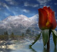 Red Rose and Mount Shasta by Kimberly Palmer