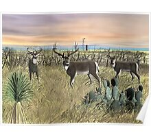 Field Deer Poster