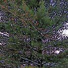 Comic Abstract Pine Tree by steelwidow