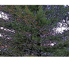 Comic Abstract Pine Tree Photographic Print