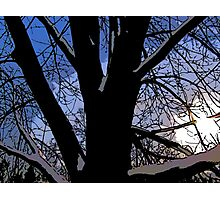 Comic Abstract Shaded Snow Tree Photographic Print
