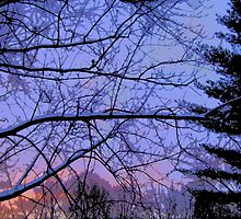 Comic Abstract Trees in Snowy Sunset by steelwidow