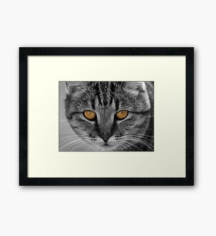 Thelma's Stare Framed Print