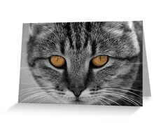 Thelma's Stare Greeting Card