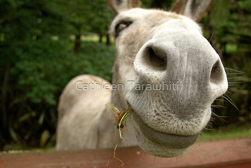 Give us a snog by Cathleen Tarawhiti