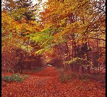 """An Autumn woodland"" by Malcolm Chant"