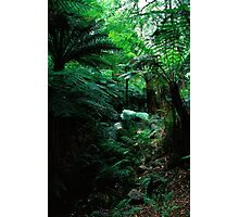 Jungle Cover Photographic Print
