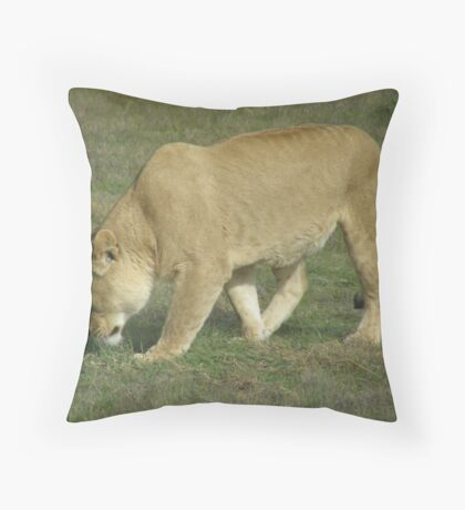 Searching... Throw Pillow