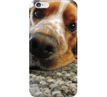 Cute Cocker Spaniel Face iPhone Case/Skin