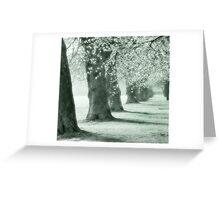 autum trees Greeting Card