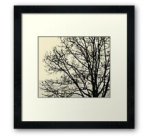 Fall Tree Silhouette Vector Yellow Framed Print