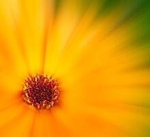 Orange Satin by John Edwards