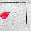 Red leaf by Silvia Ganora