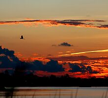 Egret's Evening Flight by Jonicool