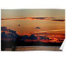 Egret's Evening Flight Poster
