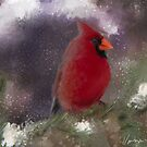 Cardinal in the Snow by SaraDiane